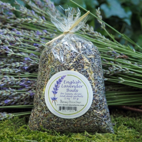lavender-buds-1